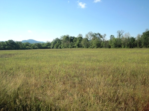 Sold! 20 ACRES + - You'll want to saddle right up when you see this 20 acre spread.  $39,500 Kentucky Real Estate