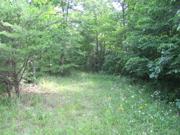 Sold! 43.52 +/- wooded acres located on Oak Ridge Church Rd.    $59,500 Kentucky Real Estate