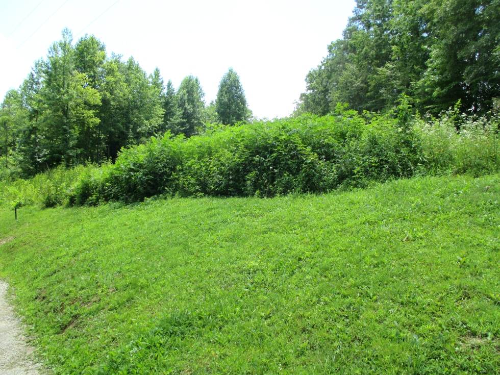 Sold! - Hwy 511 & Logan Rd., Williamsburg .79 surveyed acres located at 511 & Logan Rd. | This land is not restricted and is priced to sell. $12,500  Kentucky Real Estate