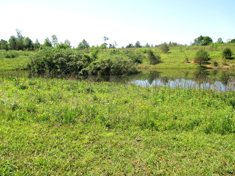 SOLD Walker Mill Road | 124 +/- acres of varying terrain with large pond and 3 gas wells. Kentucky Real Estate