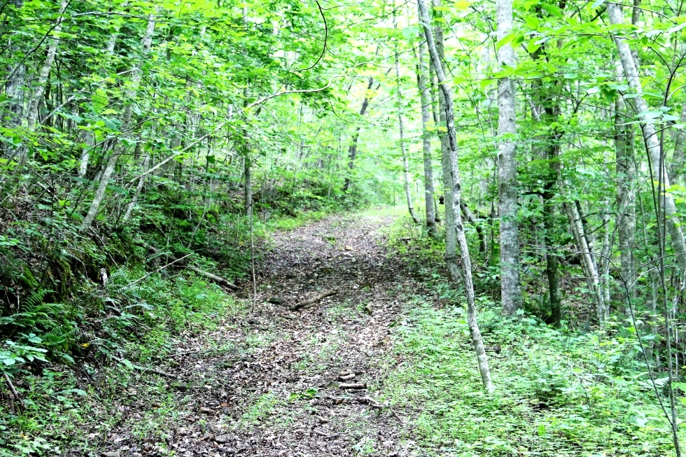 SOLD Kidd Rd./Jellico Ck., Williamsburg (Free Gas) | 112.78 surveyed acres Kentucky Real Estate