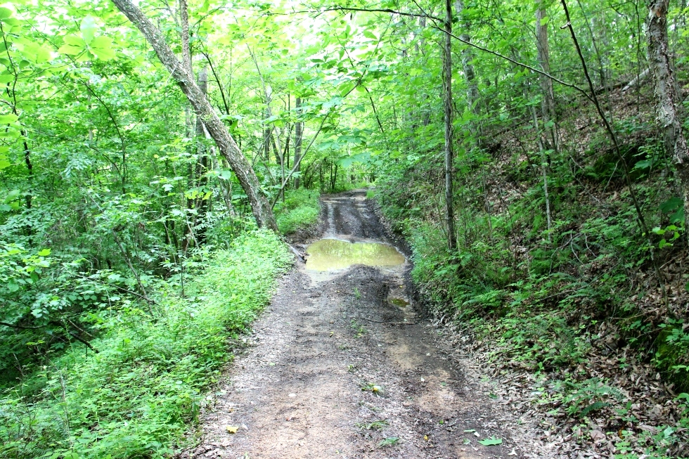 Kidd Rd./Jellico Ck., Williamsburg (Free Gas) | 112.78 surveyed acres Kentucky Real Estate