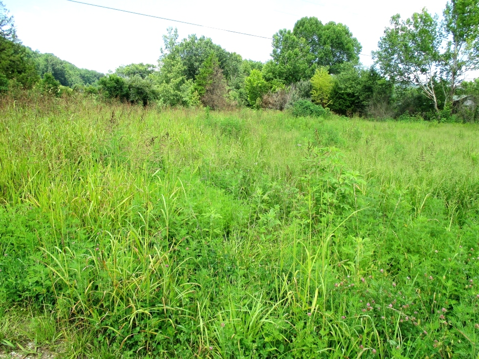 Little Wolf Creek, Williamsburg | Free Gas | 124.088 surveyed acres. Undeveloped land with fields and mountains Kentucky Real Estate