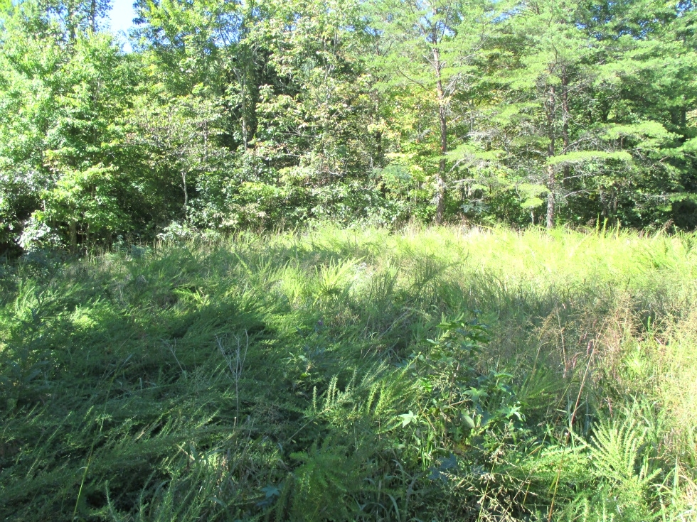 SOLD  27.436 surveyed acres on Ryan's Creek in Whitley County | Good hunting! Kentucky Real Estate
